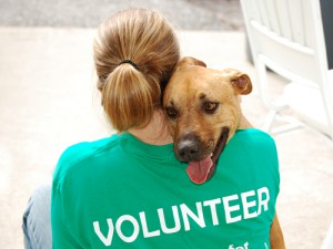 Image Source - Delta Animal Shelter